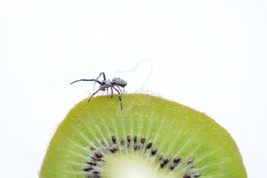 The Kiwi Spider by jactaylor