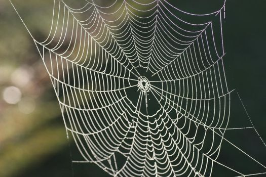 Cobweb.. by Firey-Sunset