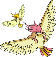 017 - Pidgeotto by Tails19950