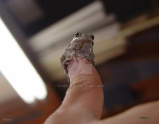 Wise Froggy on thumb throne by InKibus
