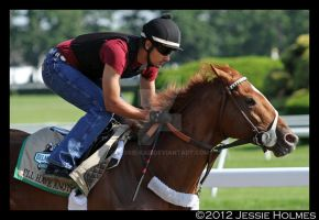 I'll Have Another at Belmont by Jessie-kad