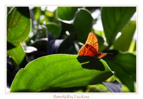 Butterfly III by ToXxIcRoSe