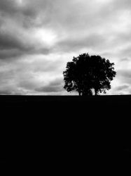 Oaks on a Hill on a Cloudy Day by KevinStephens