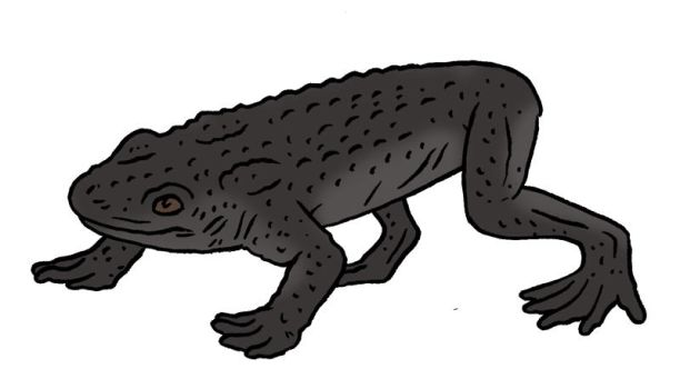 The Lost World Bestiary - Mendoz Pebble Toad by Pristichampsus