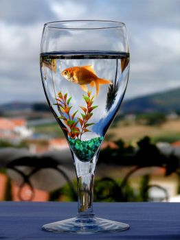 Fish Bowl by funkmaster-c