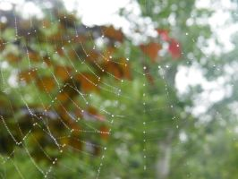 Web with Droplets 3 by kbcollins