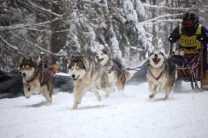 Sled Dogs by MauserGirl