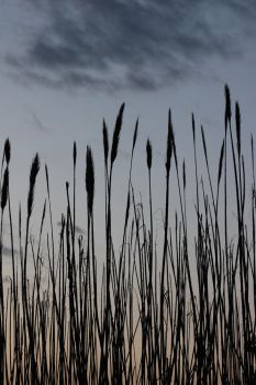Cat Tails by wanderingmage