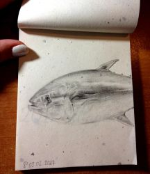 2017-02-03 Thunnus Thynnus (Atlantic Bluefin Tuna) by Sillageuse