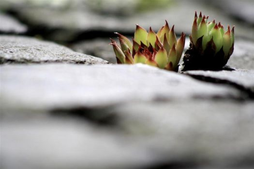 Blooming Stones by MARMORcreative