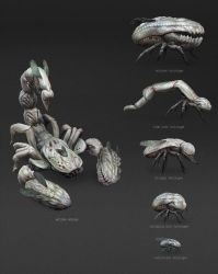 CA Team Challenge_creature concept_001_CSheet by albino-Z