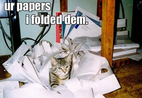 ur papers...  I folded them by LOL-Cat