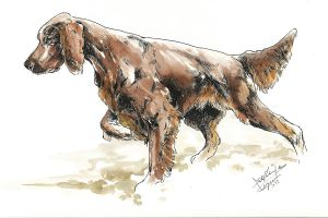 Irish setter by bull-terrier