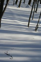 Stripes on Snow by hollysfollys