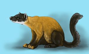 Yellow Throated Marten by Puppy-Chow
