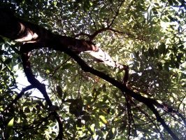 Avocado Grove Canopy 2 by dracontes