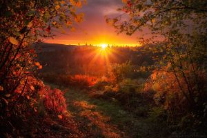 Magical Phase by FlorentCourty