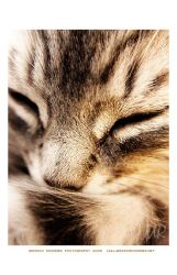 cat nap by ArtistsForCharity