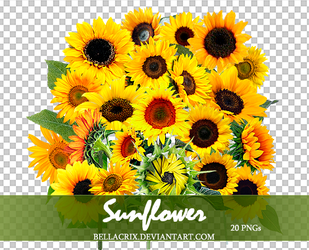 Sunflower PNGs by Bellacrix