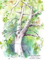 Sketchbook - Backyard tree by dasidaria-art