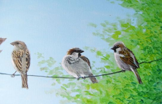 SPARROWS DETAIL WIP by alanclimb