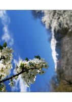Romanian Spring by ioannicolae