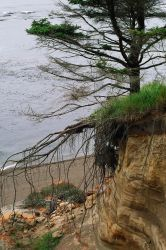 Misc stock tree roots by DarkladyStock