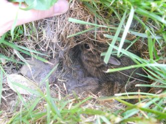 Baby Bunnies :) by AssassinsCreedTroy