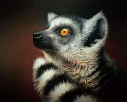 Ring-Tailed Lemur by daniluc78