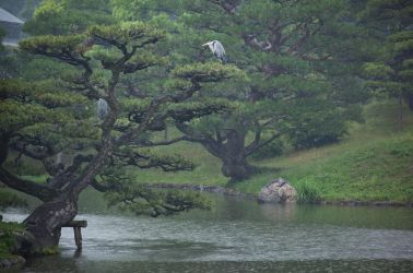 Forlorn Herons by Quit007