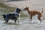 Dog Stock 14 by Malleni-Stock
