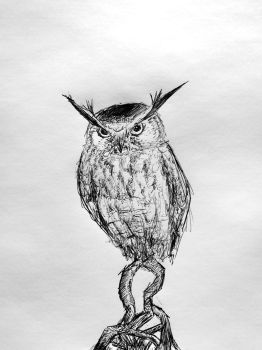 Owl by PitipoaH