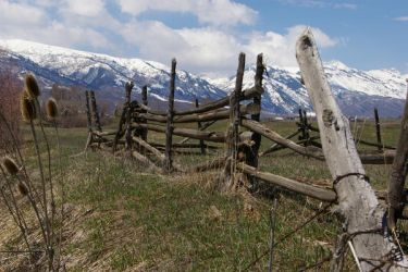 Old Fence by nicoletaggart