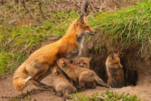 Mother and Kits by Les-Piccolo