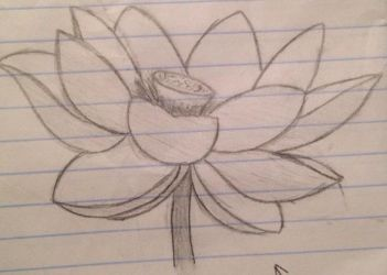 Lotus Flower by tayloi