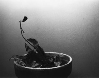 Dead Plant by thisismyname09