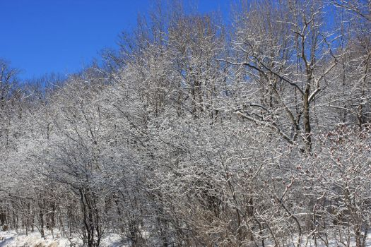 Winter on Mount Royal by 914four