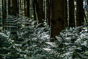 In to The Woods by isischneider