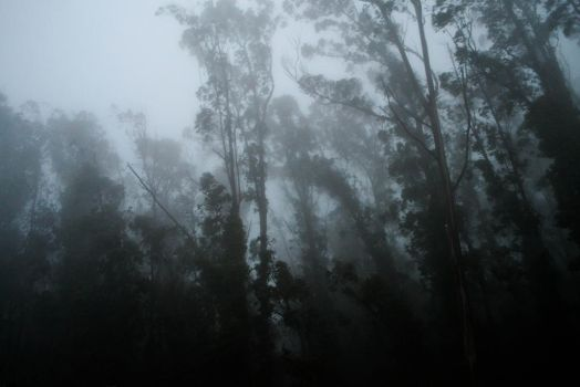 Fog and Trees - 2 by xdgrace