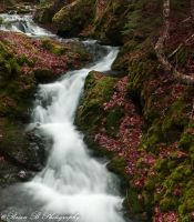 Breathtaking Too by Brian-B-Photography