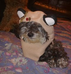 My Personal Ewok by DemodexPlush