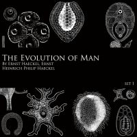 Evolution of Man - Brush Set 1 by FidgetResources