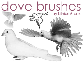 Dove Brushes I by LithiumStock