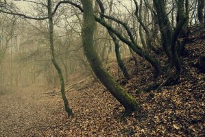 spring wood by Tomasx4