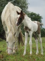 Mother and Son by Horselover60-Stock