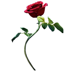 Beauty And The Beast | Rose png by mintmovi3