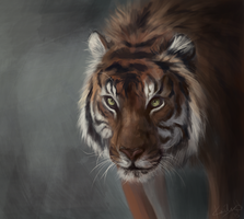 Tiger Painting by tangolium