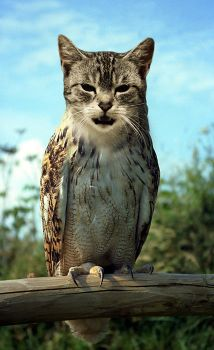 Cat Owl by mceric