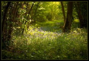 Springtime at Foxley Woods by grimleyfiendish