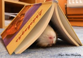 He loves reading by AnitaBright